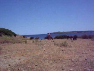 лошади Vid